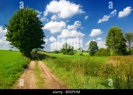 Saturated summer landscape - Lonely tree near country road. Mazury, Poland. - Stock Photo
