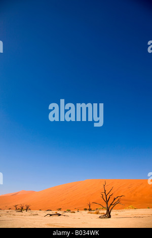 Dead tree in front of sand dune, Namib Desert, Namibia, Africa - Stock Photo