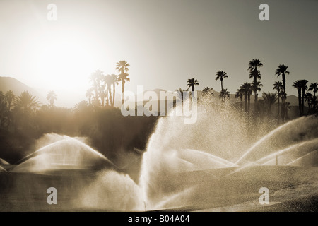 Sprinklers and palm trees - Stock Photo