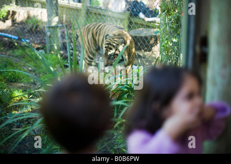 Girl turns and pulls a face emulating the roar of a tiger she has just watched pass by the glass window in front - Stock Photo