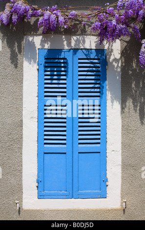 Blue Shutters with Wisteria in Burgundy, France. - Stock Photo