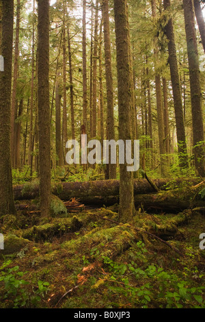 coastal sitka spruce - photo #38