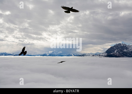 Austria, Werfen, Eisriesenwelt, Eagles in flight - Stock Photo