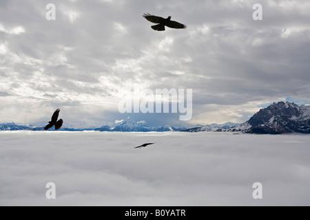 Austria, Werfen, Eisriesenwelt, Eagles in flight - Stock Photo