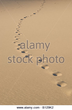 Footprints in Sand Dunes Death Valley Stovepipe Wells California - Stockfoto