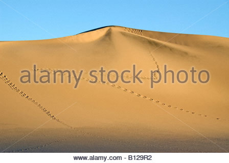 Footprints in Mesquite Flat Sand Dunes Death Valley National Park Stovepipe Wells California - Stockfoto