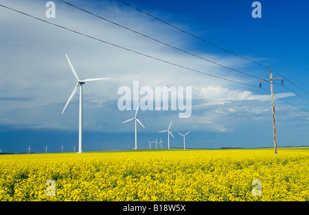 wind turbines in canola field with electricity transmission lines in the foreground, near St. Leon, Manitoba, Canada. - Stock Photo