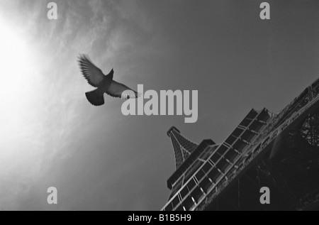 France, Paris, Eiffeltum, dove flying, low angle view - Stock Photo