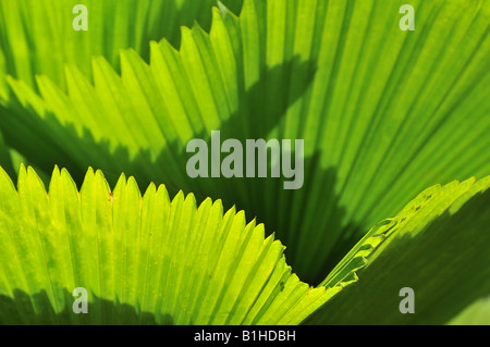 Close up of tropical palm leaves - Stockfoto