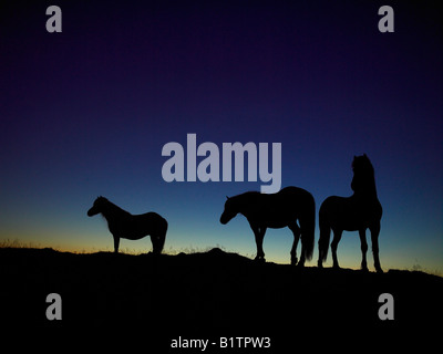 Icelandic Horses Silhouetted Against the Evening Sky, Iceland - Stock Photo