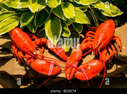 Canada, New-Brunswick, lobster fisherman on Acadian coast Stock Photo, Royalty Free Image ...