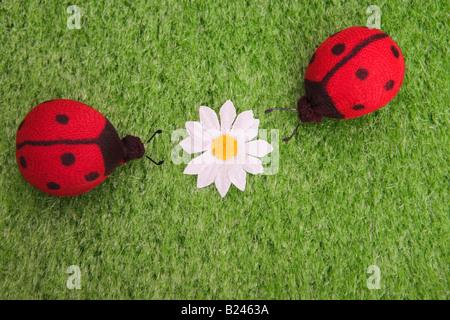 Ladybirds and a daisy - Stock Photo
