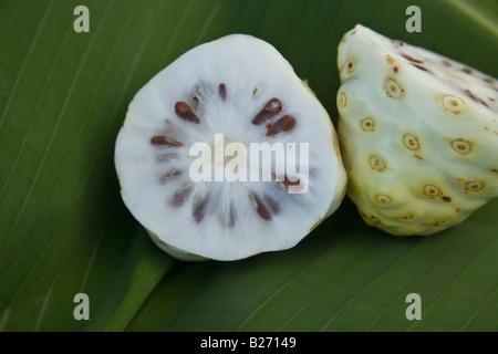 Noni fruit. - Stock Photo