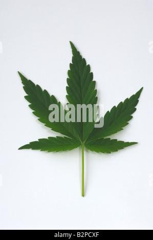 how to buy cannabis stocks