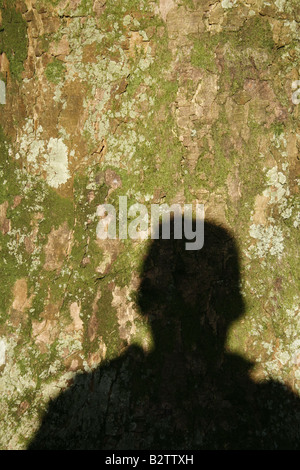 one man's shadow on tree bark in countryside - Stock Photo
