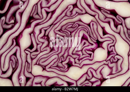Red cabbage - Stock Photo