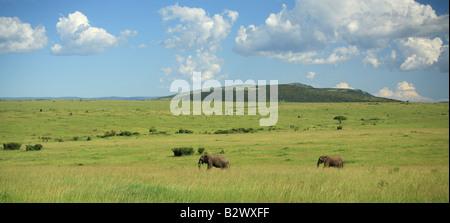 Two elephants walking through the Masai Mara Africa - Stock Photo