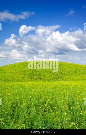 Summer landscape - saturated view of meadow. Europe, Poland. Adobe RGB (1998). - Stock Photo