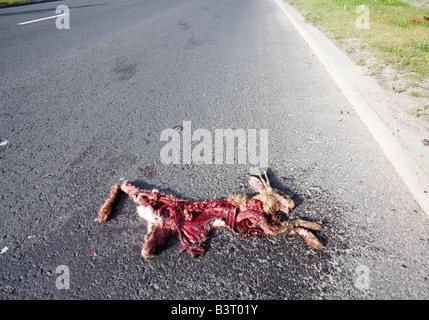roadkill - Stock Photo