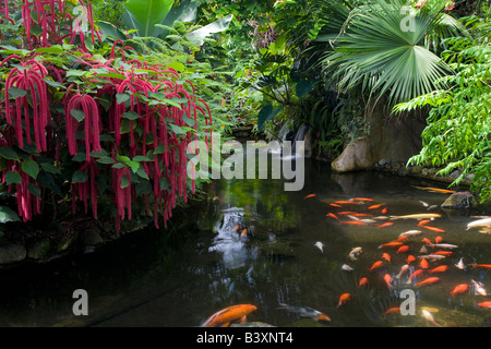 Pond with red Chennile and waterfalls Victoria Butterfly Gardens ...