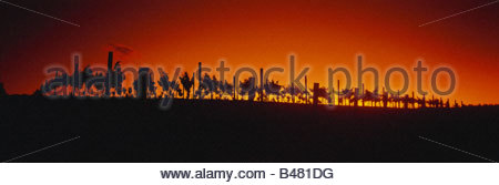Sunrise over vineyard in Napa Valley, California, USA - Stockfoto