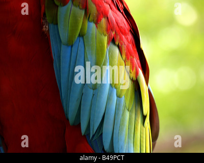 Colorful macaw feathers - Stock Photo