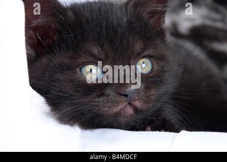 Black Clump Of Fur In Cat