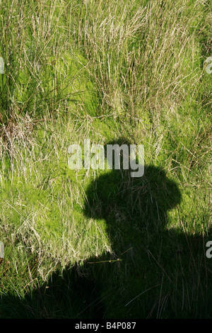 one man's shadow in field in countryside - Stock Photo