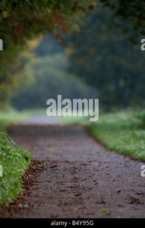 empty parkland footpath in lagan valley regional park autumn morning in mist county down northern ireland uk - Stock Photo