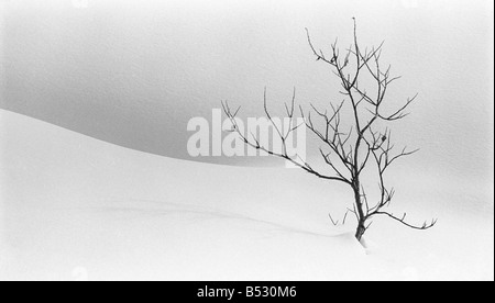 Lone tree stands watch over a winter landscape Hatcher Pass Southcentral Alaska - Stock Photo