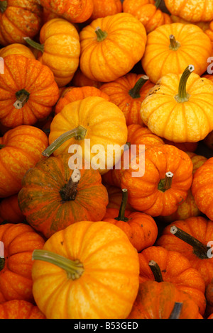 Close up texture of small orange pumpkin gourds - Stockfoto