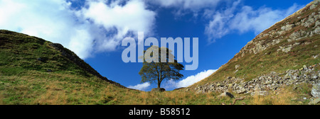 Sycamore Gap, Hadrian's Wall, near Hexham, Northumberland, England, United Kingdom, Europe - Stock Photo