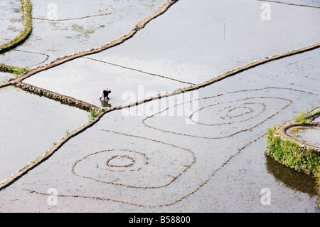 Elderly woman working in water filled rice terraces with fish traps Tulgao Village Philippines Southeast Asia - Stock Photo