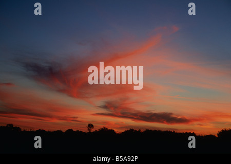 Tree line Silhouette against bright red orange sky SUNSET NORTHERN TERRITORIES AUSTRALIA - Stock Photo