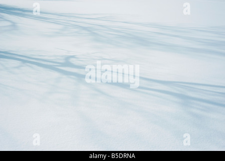 Shadow of tree branches on snow - Stock Photo