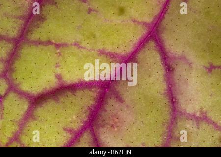 Macro image os leaf veins - Stock Photo