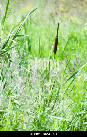 Field of tall grass and wildflowers - Stock Photo