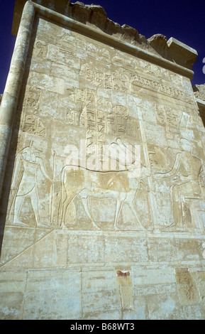 Wall carving on second terrace of temple of Queen Hatshepsut with goddes Hathor as a cow bearing the sun disk between - Stock Photo