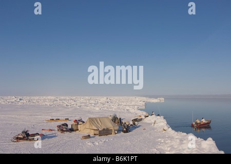 ringed seal Phoca hispida adult rests outside its breathing hole on multi layer ice Chukchi Sea off the Arctic coastal - Stock Photo