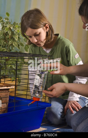 mother and his daughter preparing a cage for Guinea pigs or rabbits, fixing drinking bottle - Stock Photo