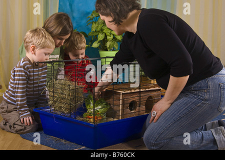 mother with children preparing a cage for Guinea pigs or rabbits, putting green fodder in the cage - Stock Photo