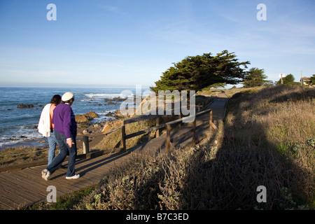 Visitors walking on the wooden boardwalk past a Cypruss tree, San Simeon State Park, San Simeon, California, USA - Stock Photo