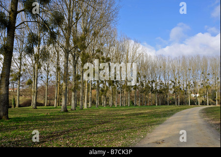 Woodland Path along River Thouet, Parthenay, Deux-Sevres, France - Stockfoto