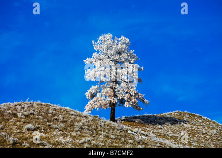 A lonely snow covered tree on the landscape - Stock Photo