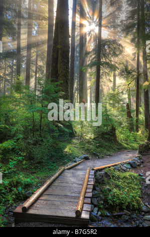 Forest at Sol Duc Falls in Olympic National Park, Washington - Stock Photo