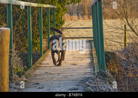 Dog on frosty bridge in fields outside of Oxford, North Hinksey Village - Stock Photo