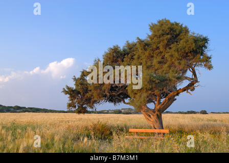 Lonely tree on a meadow - Stock Photo