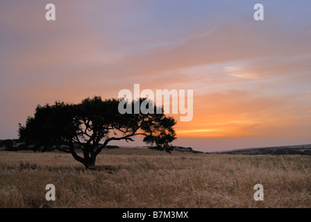 Lonely tree on a meadow at a dawn - Stock Photo