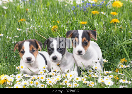 Ingliston Dog Show