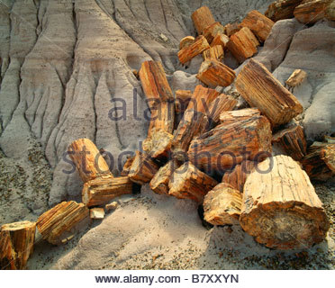 Petrified logs at Blue Mesa Petrified Forest National Park Arizona - Stock Photo